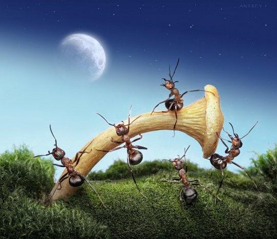 Жил весёлый муравей.Много он имел друзей,