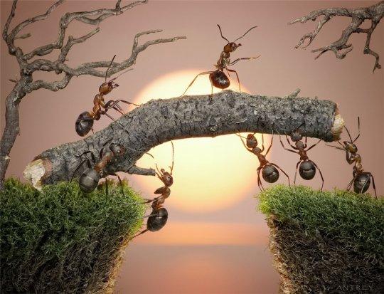 Под высокой кручей, В муравьиной куче.