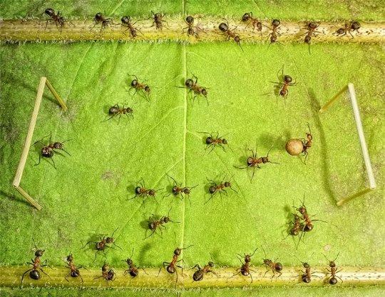 Живут дружно муравьи, Под березкою в тени,