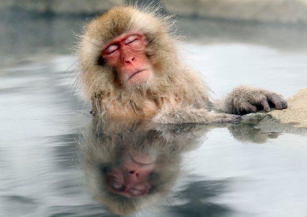 """Обезъянка """"оттаивает"""" в горячих источниках, Ногано, Япония, фото: Nick Ut"""