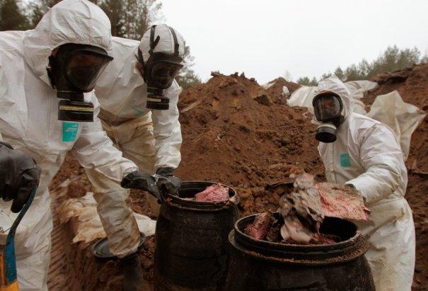 Извлечение 950 тонн пестицидов из земли, Беларусия, фото: Vasily Fedosenko