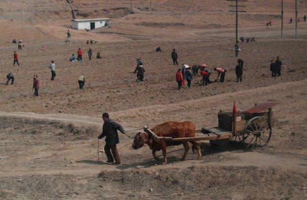"""""""Колхоз - дело благородное!"""", Северная Корея, 2012 год"""