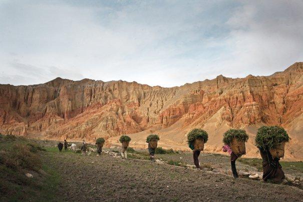 Жители Лоба возвращаются с полей, фото: Тэйлор Вэйдман