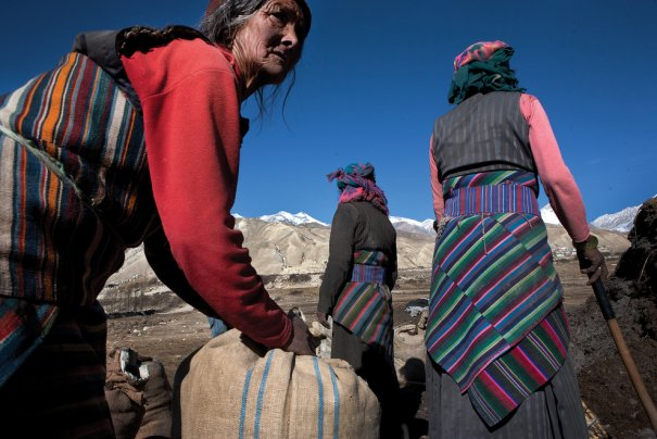 Сельские жители Пхува нагружают лошадей удобрениями, фото: Тэйлор Вэйдман