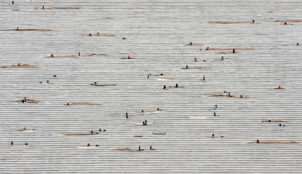 Сбор урожая аспарагуса, Эльшольц, Германия, фотография: Klaus-Dietmar Gabbert