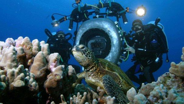 Какая аппаратура нужна, чтобы фотографировать под водой? - №1