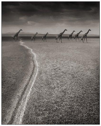 "Фотосерия ""On This Earth"", фотограф: Ник Брандт"