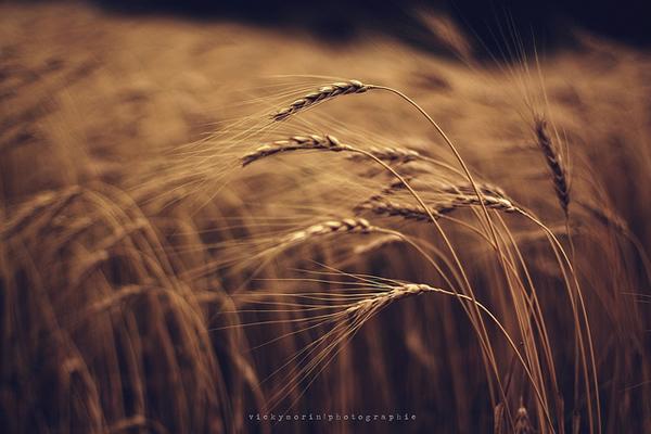 Греющие душу фотографии природы от Вики Морин - №2