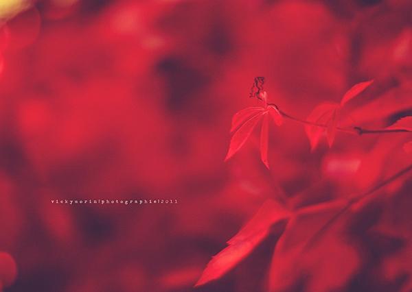 Греющие душу фотографии природы от Вики Морин - №3