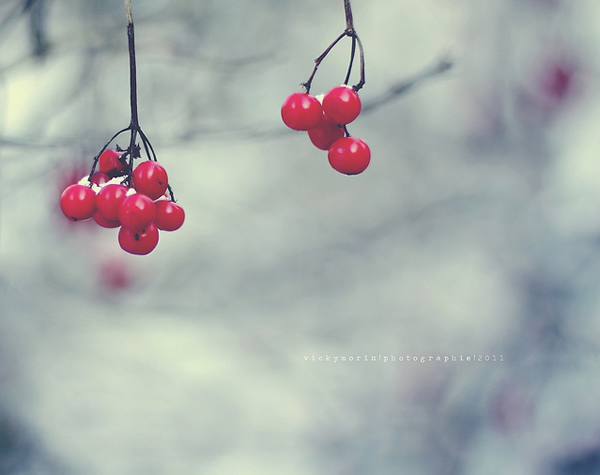 Греющие душу фотографии природы от Вики Морин - №4