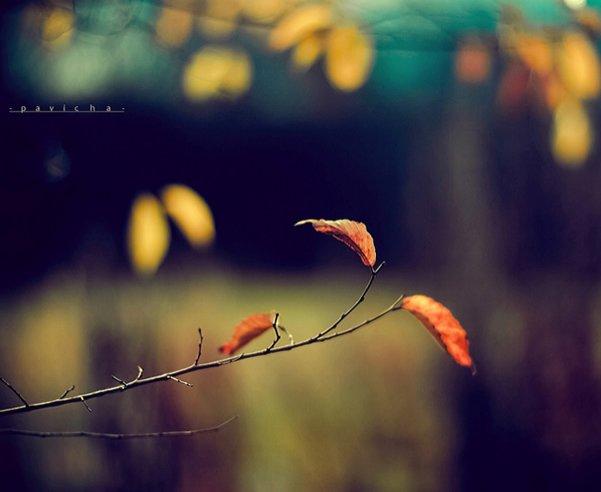 Греющие душу фотографии природы от Вики Морин - №6