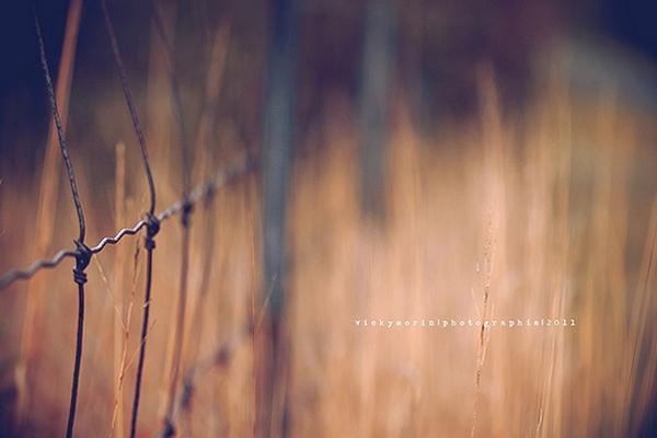 Греющие душу фотографии природы от Вики Морин - №9