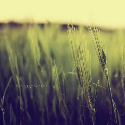 Греющие душу фотографии природы от Вики Морин - №13