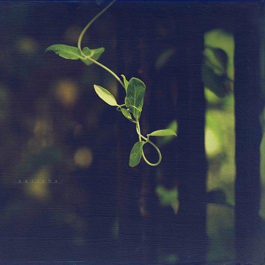 Греющие душу фотографии природы от Вики Морин - №14