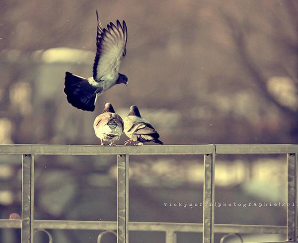 Греющие душу фотографии природы от Вики Морин - №15
