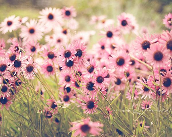 Греющие душу фотографии природы от Вики Морин - №16