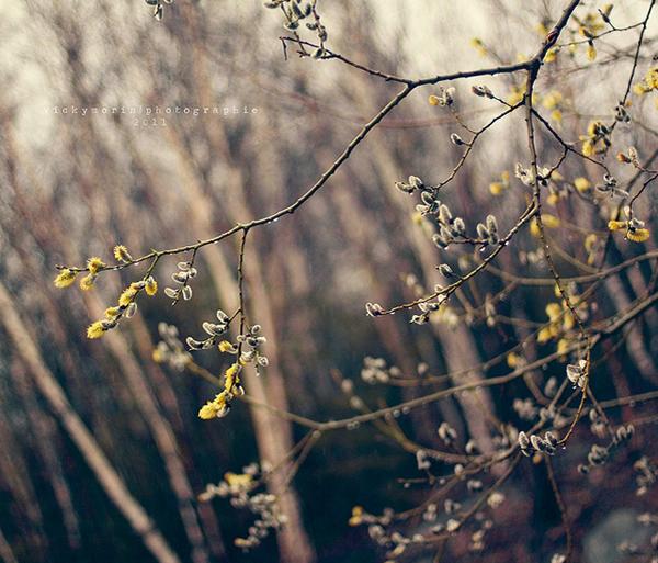 Греющие душу фотографии природы от Вики Морин - №18