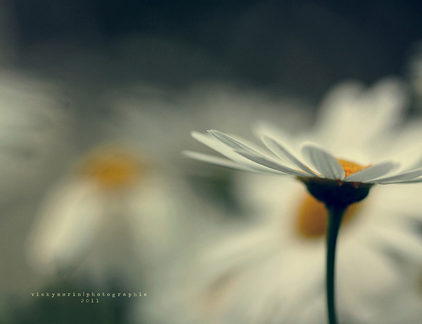 Греющие душу фотографии природы от Вики Морин - №19