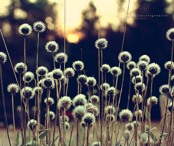 Греющие душу фотографии природы от Вики Морин - №21