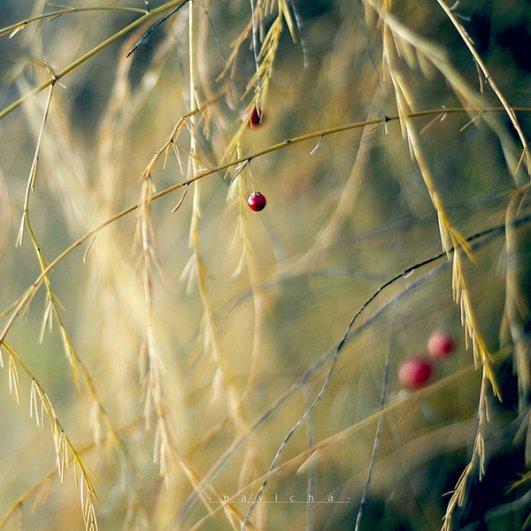 Греющие душу фотографии природы от Вики Морин - №22