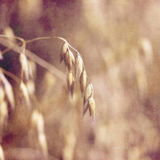 Греющие душу фотографии природы от Вики Морин - №23