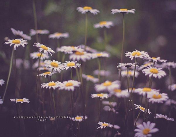 Греющие душу фотографии природы от Вики Морин - №24