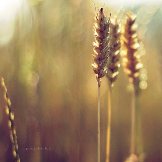 Греющие душу фотографии природы от Вики Морин - №26