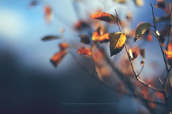 Греющие душу фотографии природы от Вики Морин - №27