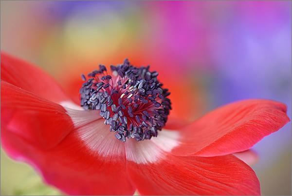 Живописная флора  Джеки Паркера - №15