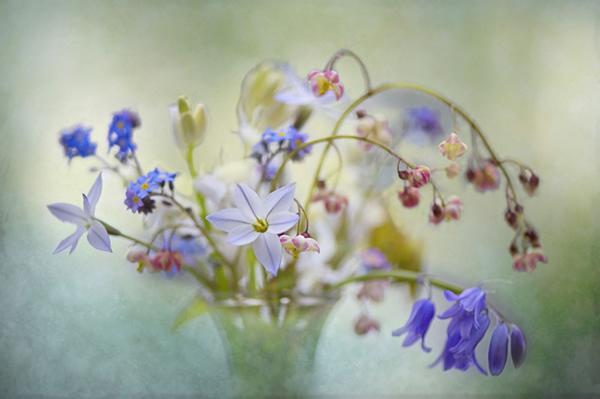 Живописная флора  Джеки Паркера - №17