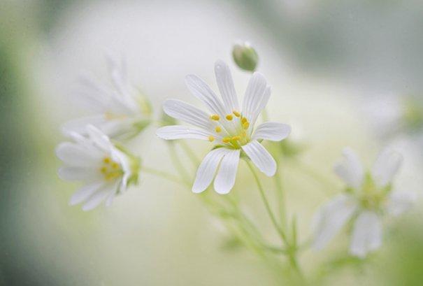 Живописная флора  Джеки Паркера - №18