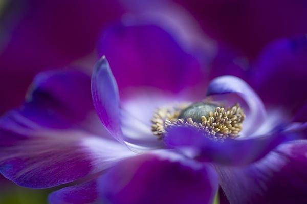 Живописная флора  Джеки Паркера - №24