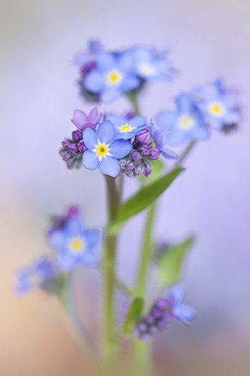 Живописная флора  Джеки Паркера - №28