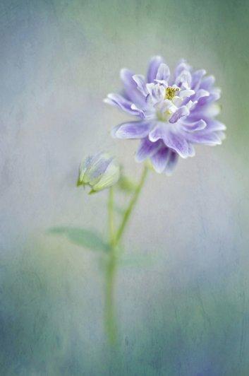 Живописная флора  Джеки Паркера - №30