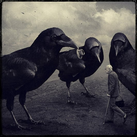 Crows © Sarolta Bán