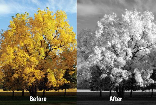 Эффект инфракрасной фотографии c Photoshop CS5 - №1