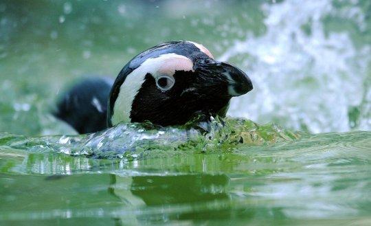 Зоопарк, Берлин(фото:Caroline Seidel)