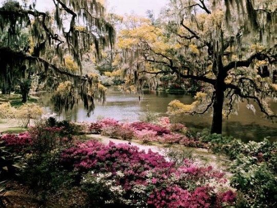 сад Мидлтон,Южная Каролина (фото:B. Anthony Stewart)