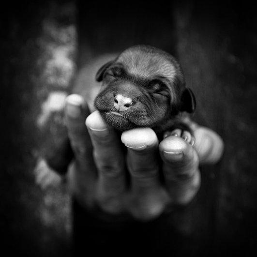 Вдохновляющие фотографии Себастьяна Лукцуво - №23