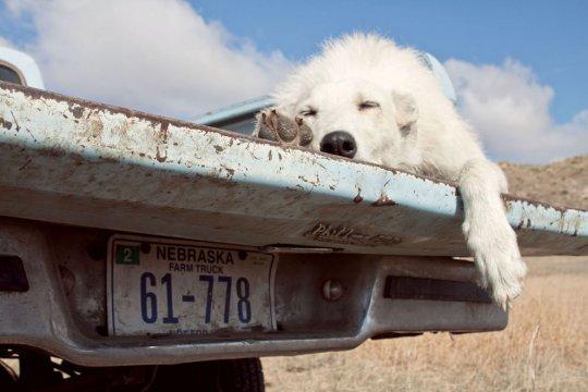 """Собачая работа"", Техас (фото:Jamie Illian)"