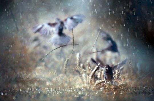 """""""Дождевые"""" ванночки (фото:Yasemin Erhan Kahraman)"""