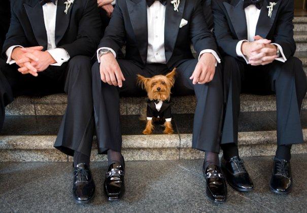 Джо Бьюссинк — самый дорогой свадебный фотограф в мире - №11