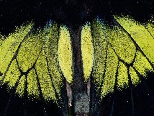 Бабочка (фото: Mattias Klum)