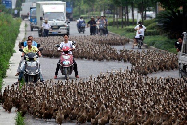 (Reuters/China Daily)