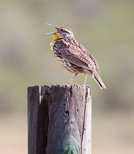 Как получить хорошие фотографии птиц - №2