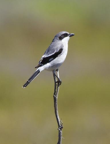 Как получить хорошие фотографии птиц - №3
