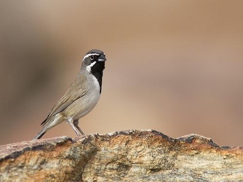 Как получить хорошие фотографии птиц - №4