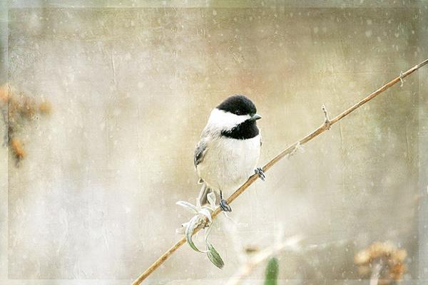 Текстурная фотография Памелы Шмидер - №1