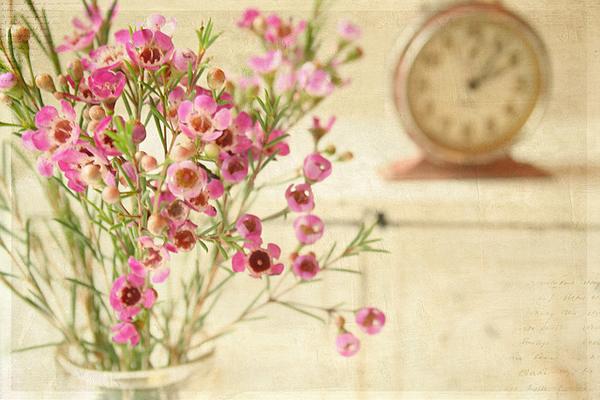 Текстурная фотография Памелы Шмидер - №3