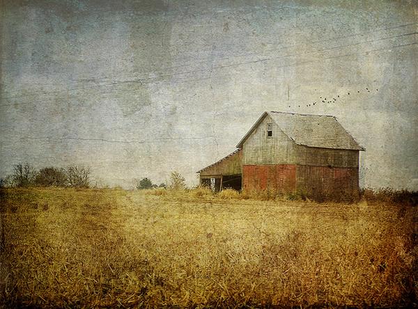 Текстурная фотография Памелы Шмидер - №11
